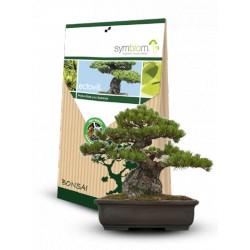 Mykorhiza Rhodovit Bonsai