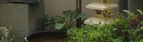 Symbolika rastlín vhodných pre bonsaje