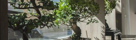 Základné bonsajové výrazy