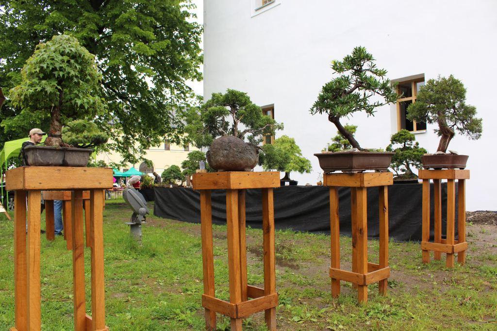 2016_5_JarnaKrasaBudZA_MKrajc (28)